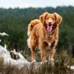rauwvoer-voor-de-hond-cover-200x300